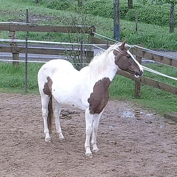 Meine_Pferde_600x600_Tessa