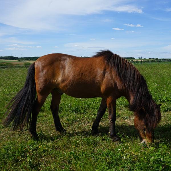 Meine_Pferde_600x600_Erpur_02