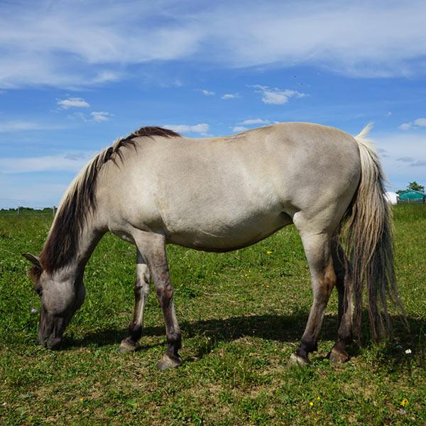 Meine_Pferde_600x600_Luna_02